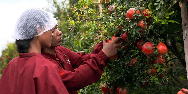 Aavishkaar Capital Investee INI Farms enters D2C commerce after disrupting fruit supply-chain & exports - Featured
