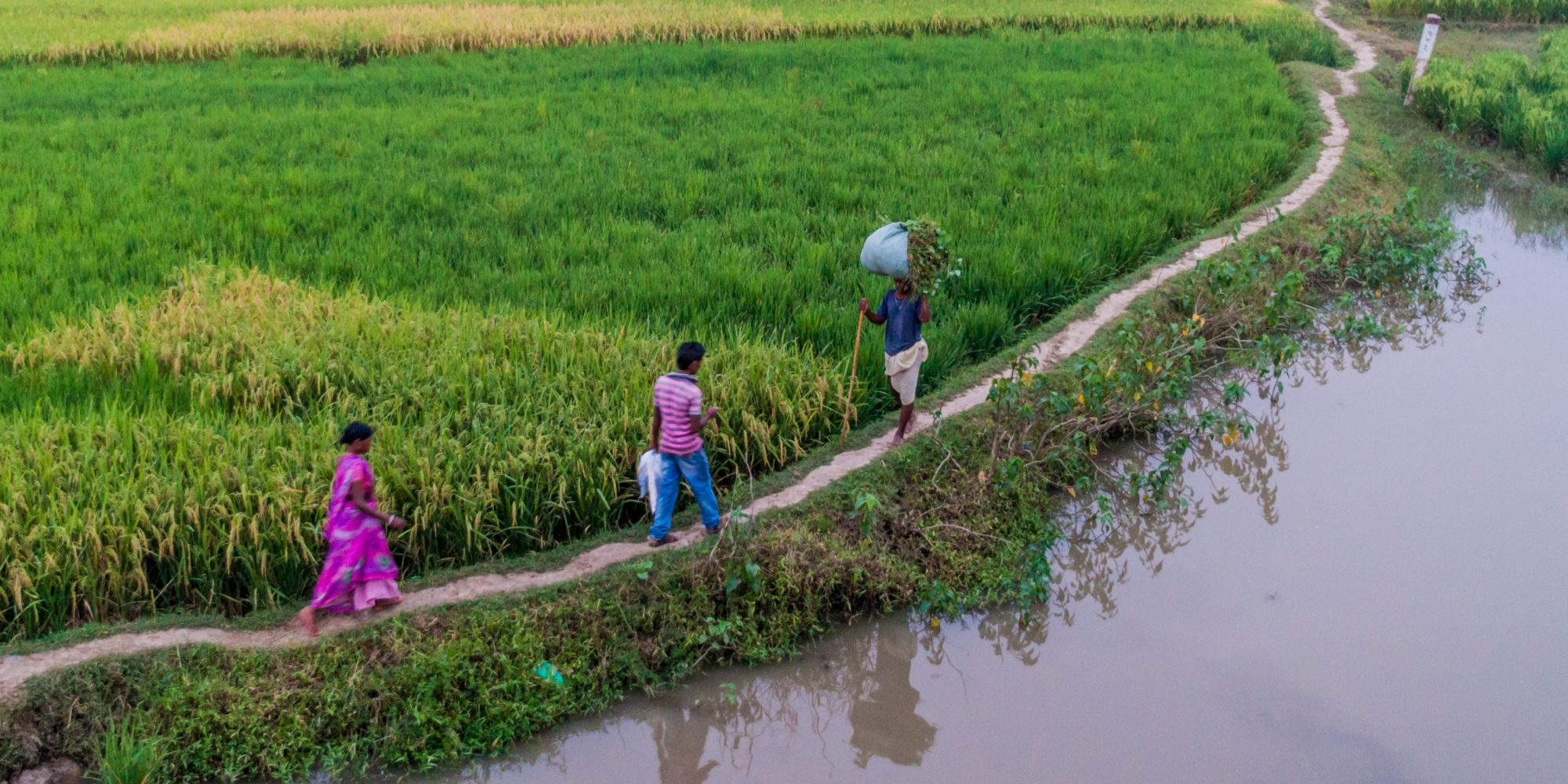 Responding to a crisis: Building a rural workforce to support smallholder farmers